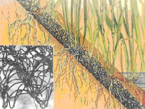 3D geomat helps to stabilize soil and develops planting root system.