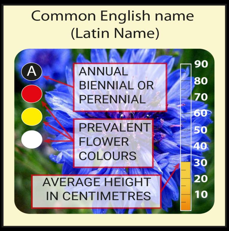 Flower Identification