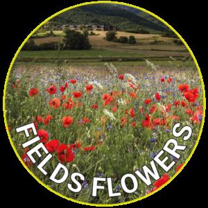 Fields Flowers
