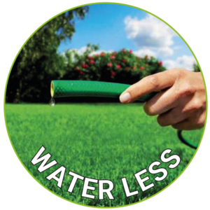 Water Less Lawn